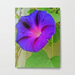 Morning Glory Flower Metal Print