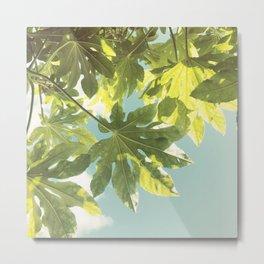 Fig Leaves Metal Print
