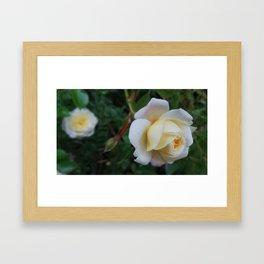 Tiny Rose Framed Art Print