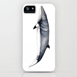 Minke whale iPhone Case