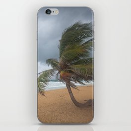 Windswept Palm tree iPhone Skin