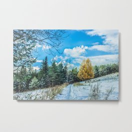 Larch in late autumn Metal Print