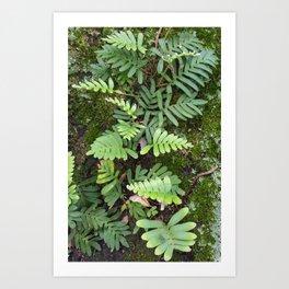 Moss and Fern Art Print