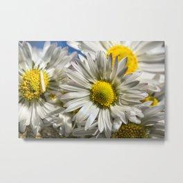 DAISY FLOWER &  DAISY FLOWER Metal Print
