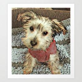Louis the Yorkshire Terrier Art Print
