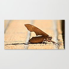 Bubble Blowing Moth  Canvas Print