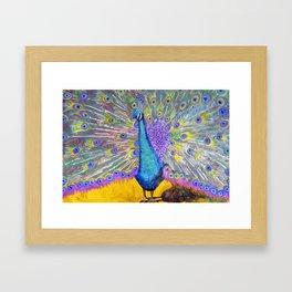 Peacock Dance Framed Art Print