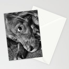 Dog playing with his ball Stationery Cards