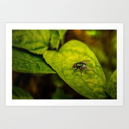 Fly in the green Art Print