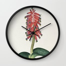 Robert Jacob Gordon - Lachenalia bulbifera - 1777/1786 Wall Clock