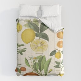 Citrus Fruits Lime Lemons Vintage Scientific Illustration Encyclopedia Labeled Diagrams Comforters