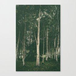 Tall Skinny Trees Canvas Print