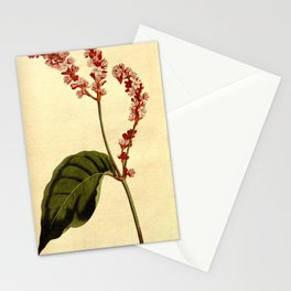 213-polygonum orientale, Tall Persicaria Stationery Cards