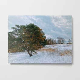 Lonely pine in the field Metal Print