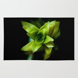 Aptenia succulent plant Rug