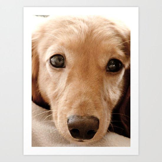 Puppy-Dog Eyes Art Print