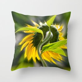 The sunflower from behind Throw Pillow