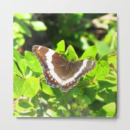 Watercolor Butterfly, White Admiral Butterfly 01, Middletown, Maryland Metal Print