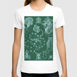 Ernst Haeckel Siphonophorae Hydrozoan T-shirt