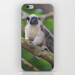 Titi monkey iPhone Skin