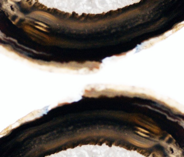 Agate Translucent #Brown #1 #decor #art #society6 Metal Travel Mug