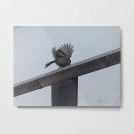 Chickadee Taking Flight Metal Print