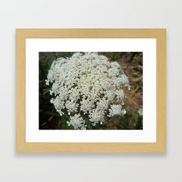 The Queen's Lace Framed Art Print