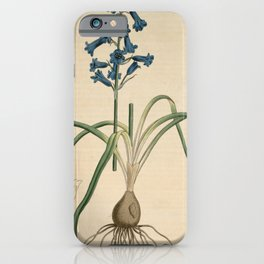 Flower 398 hyacinthus amethystinus Spanish Hyacinth13 iPhone Case