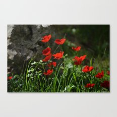 Anemones and Rock Canvas Print