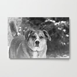 This is Serious Dog Business Metal Print
