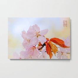 Sakura - Japanese cherry blossom Metal Print