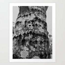 How Much Wood Could a Woodpecker Peck Art Print