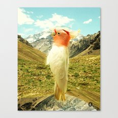Parrot Mountain Canvas Print