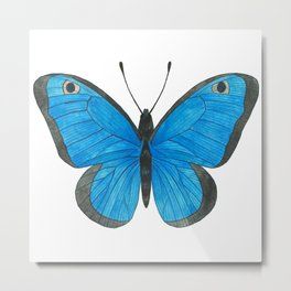 Morpho Butterfly Illustration Metal Print