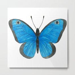 Morpho Butterfly Illustration Metal Print