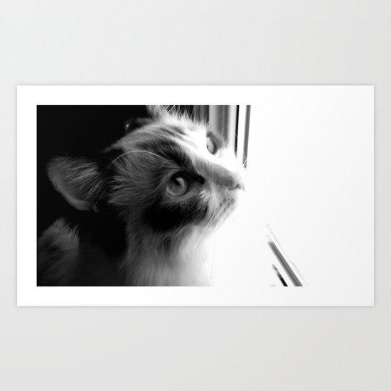 Ragdoll cat at the window. Art Print
