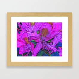 Rhododendron Fuscia Pink Framed Art Print