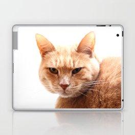 Red cat watching Laptop & iPad Skin