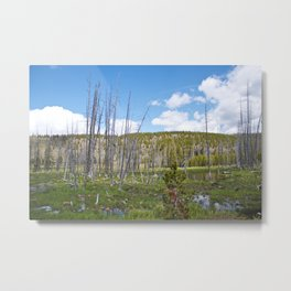 Saturated Metal Print