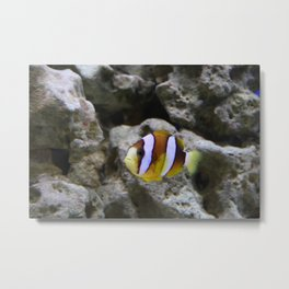 Sea World Colorful Fish Metal Print
