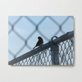 Little Bird Metal Print