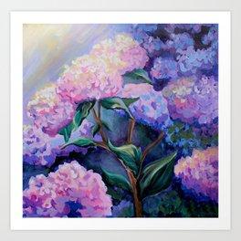 Cape Hydrangeas Art Print