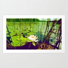 Lone Lily Art Print