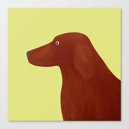 Red Setter Canvas Print