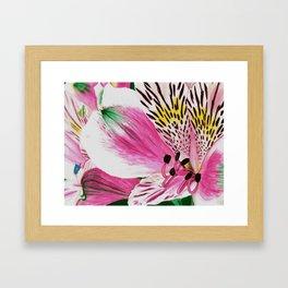 Peruvian Lilies Framed Art Print