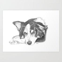 Boarder Collie Sketch Art Print