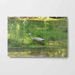 Heron Standing In Water Metal Print