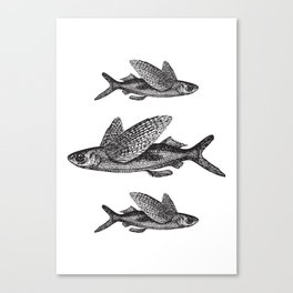 Flying Fish | Black and White Canvas Print