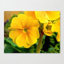 Yellow Heartsease Flower Canvas Print