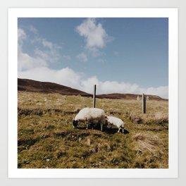 Scottish Sheep Art Print